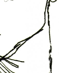 Egon Schiele -Self Portrait (detai)