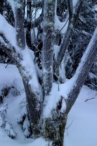 Snow, lichen, moss 24 1 15
