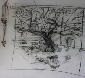Tree in Lepramuseet Kloster and architectural detail 30 5 15 Bergen