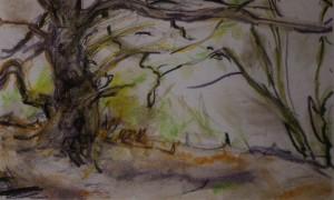 For Laurence Rose. Hilltop Oak/Ironstone. Sandy 16 11 15