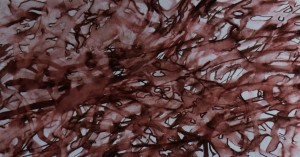 Nuthatch (Sitta Europaea) Manaccan 22 11 15