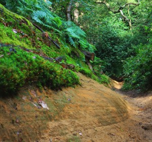Mystery Road. North Downs way west of Guildford, July 2014. Microclimates and geology