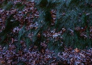 First Frost Stillwater 12 11 16